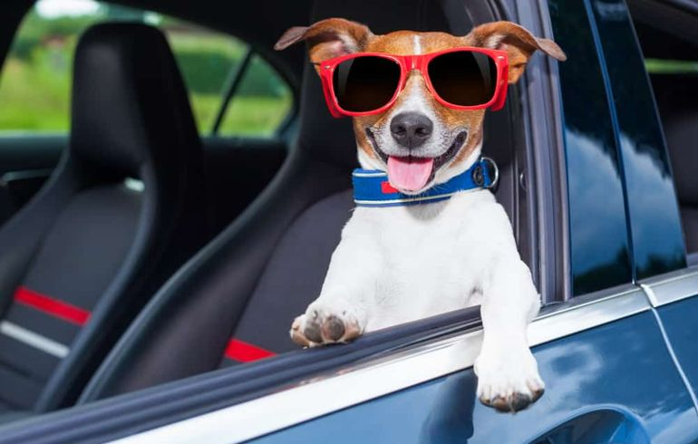 Keep Your Pooch Safe in the Car